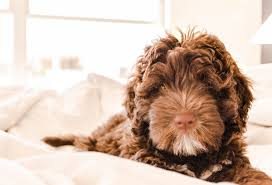 pet friendly hotels inns and b bs across the garden state