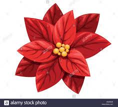 Schönen Roten Weihnachtsstern Blume Weihnachten Dekoration
