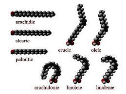 Ácido graso - Wikipedia, la enciclopedia libre