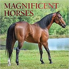 Buy <b>Magnificent Horses</b> 2018 Calendar Book Online at Low Prices ...