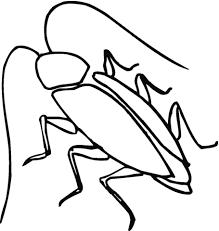 Kakkerlak Lange Sprieten Kleurplaat Gratis Kleurplaten Printen