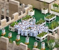 roof garden design hotel. the culinary team of waldorf astoria hotel atop 20th floor rooftop garden roof design e