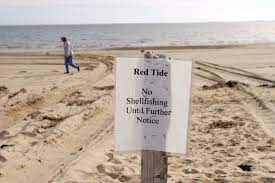 Red tides and algal blooms, facts and ...