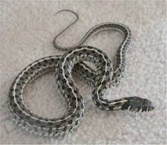 Snakes In The Garden The Good The Bad And The Ugly