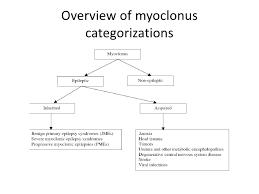 Myoclones