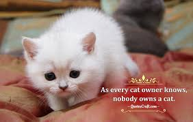 Cats Are Best Friends Pretty Cats Quotes Quotescraft
