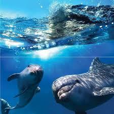 <b>Стеклянное панно Ceramica Classic</b> Dolphins 50х50 см | www.gt-a ...