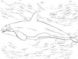 Small Picture Killer Whale Orca coloring page Free Printable Coloring Pages