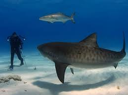 sarah turner shark trainer working animals sharks  i ve always loved sharks they re amazing creatures and they re very clever lots of people are scared of them of course i want to learn more about them