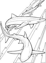Small Picture Free Shark Coloring Pages