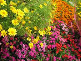 fall garden flowers. Fall Garden Flowers C