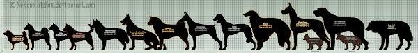 Wolf Vs Dog Size Chart Dog Size Comparison Chart 2019