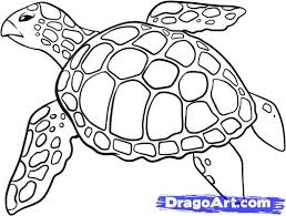 Small Picture Drawn sea turtle Pencil and in color drawn sea turtle