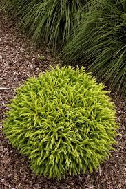 Best 25+ Full sun landscaping ideas on Pinterest   Full sun garden ...