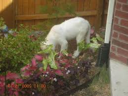 how to keep dogs out of flower beds fence to keep dogs out of flower how