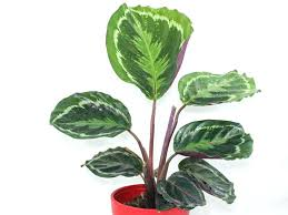 house plants pictures and names house plants names a indoor succulent house plants common names flowering