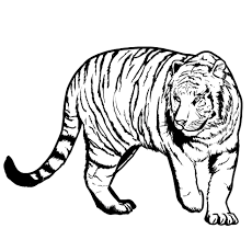 Small Picture Funny Tiger Coloring Pages Coloring Coloring Pages
