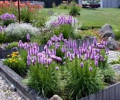 Small Picture 115 best Zone 5 6 Oregon Plants images on Pinterest Oregon