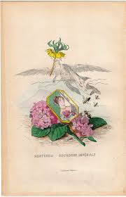 Design One Grandville Amazon Com Antique Print Flowers Personified Woman
