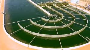 Algae Farm Design Uk Firm Said To Plan 440m Algae Farm In Oman Arabianbusiness