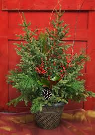 best trees for pots on patios evergreen patio trees in containers