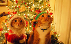 For Christmas Christmas Kittens Wallpaper Wallpapersafari