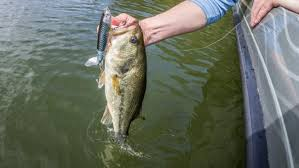 Fish The Whopper Plopper Flw Fishing Articles