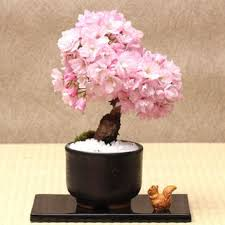 shop japanese cherry blossom decor on wanelo