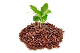 unique ways use coffee grounds plants are coffee grounds good for the garden luxury garden