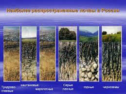 potterycane Горизонты мерзлотно таежной почвы Характеристика основных типов почв России Реферат плюс