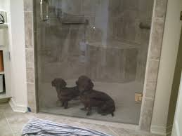 breathtaking single glass door added chrome handle as well as grey ceramic wall tiled and corner seating as decorate in modern roll in shower ideas