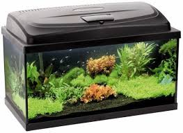 Aquael <b>Aquarium Set</b> Classic <b>Box</b> 40 LED - 1a.ee