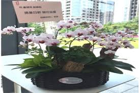 potted orchids phalaenopsis or bouquetbouquet gifts is one of the best gift to appreciate your clients alliance a pot of fresh orchid plant as a reception