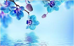 blue orchid flower wallpaper blue orchid flower wallpaper