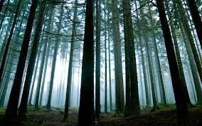 Forest Backgrounds ...