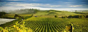 Image result for New Zealand Hawkes Bay