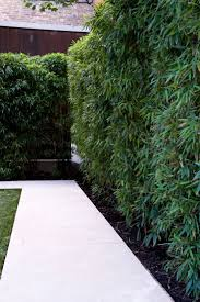 Bamboo is a great plant when you want height but not depth in a border.