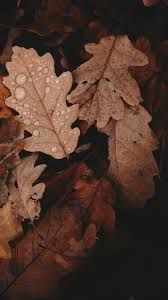 Autumn Brown Wallpapers - Wallpaper Cave
