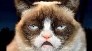 grumpy cat birthday quotes. Delighful Birthday Grumpy Cat Happy Birthday Song Free Funny Wishes ECards  123  Greetings Throughout Quotes U