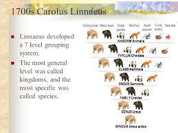 6 Kingdoms Of Living Things Chart Six Kingdoms All Living Things 6 Kingdom Introduction Video