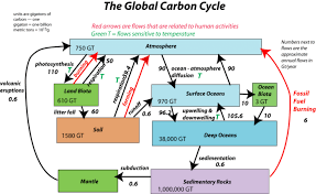 Overview Of The Carbon Cycle From A Systems Perspective