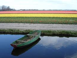 row boat and tulip fields the netherlands