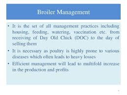 Broiler Management