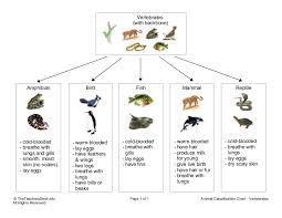 Vertebrate Phyla Chart Notes On Classification Of Vertebrates Grade 10 Science