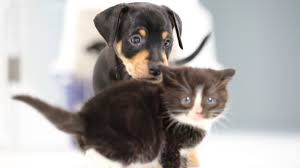 cute kittens and puppies together. Plain Cute To Cute Kittens And Puppies Together