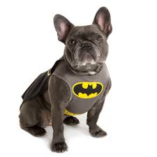 Dc Comics Batman Pet Costume Batman Dog Costume Dog
