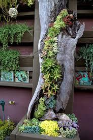 Small Picture Succulents Garden Ideas Garden Design Ideas