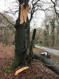 Baseline Assessment And Implementation Of A Tree Risk