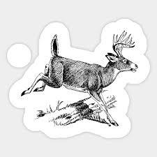 Whitetail Deer Size Chart Whitetail Buck