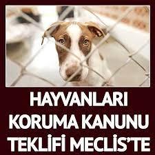 Sözcü Gazetesi - Hayvanları Koruma Kanunu teklifi...